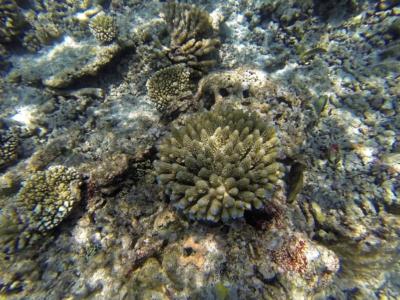 Korallenstock - Insel Bandos