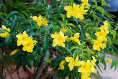 Pflanze - Praslin