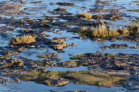 Kruger Nat. Park - Olifants Fluss