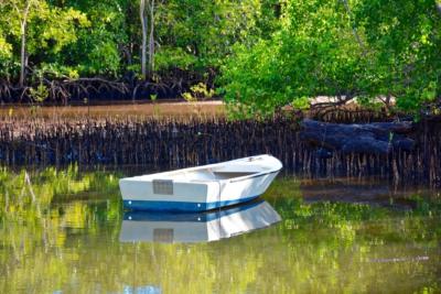 Mangroven - Mahe