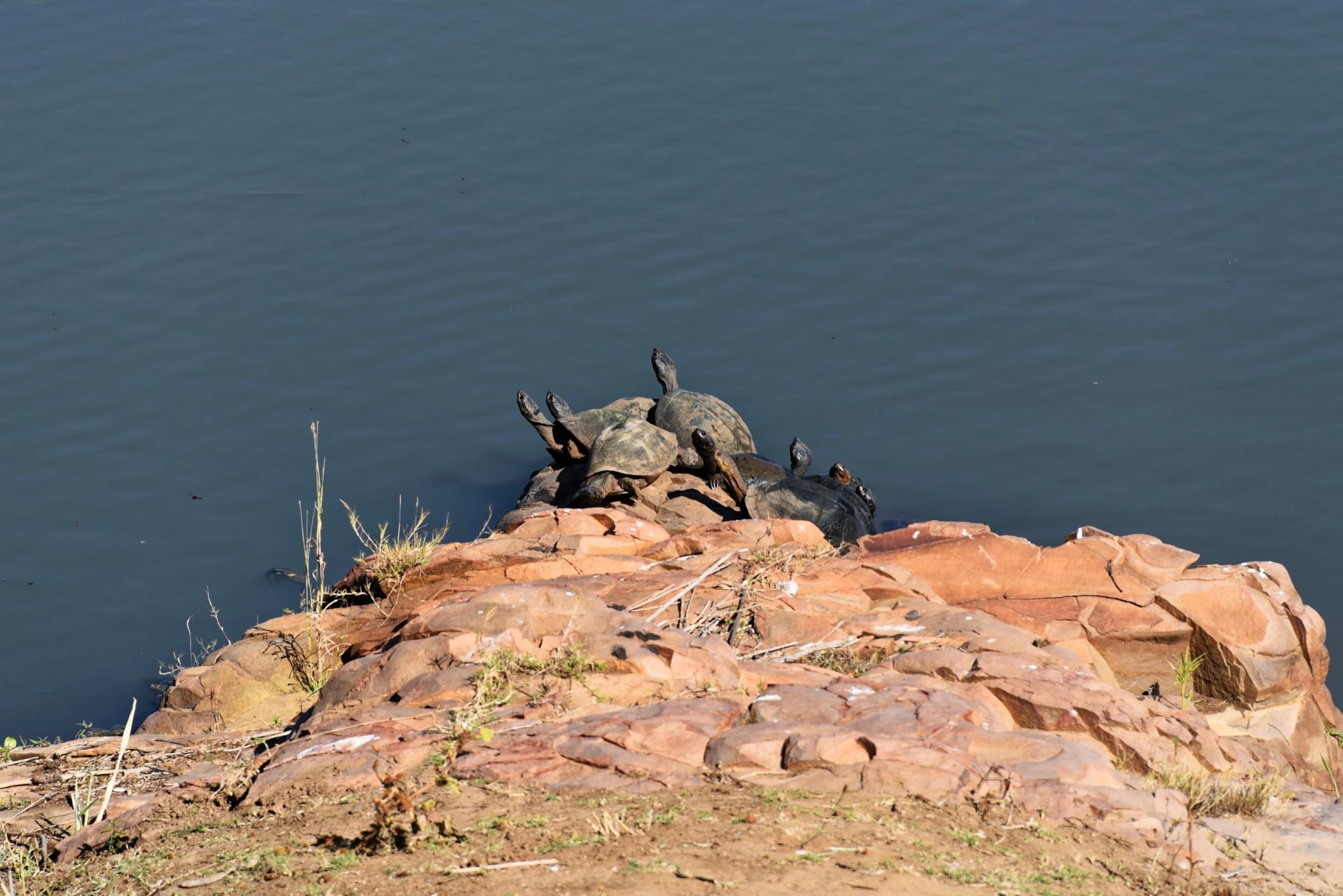 Kruger Nat. Park - Schildkröten