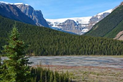 Columbia Icefield - Jasper NP
