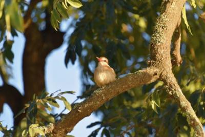 Vogel auf einem Baum