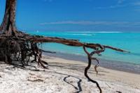 Baumstumpf mit Luftwurzeln am Strand