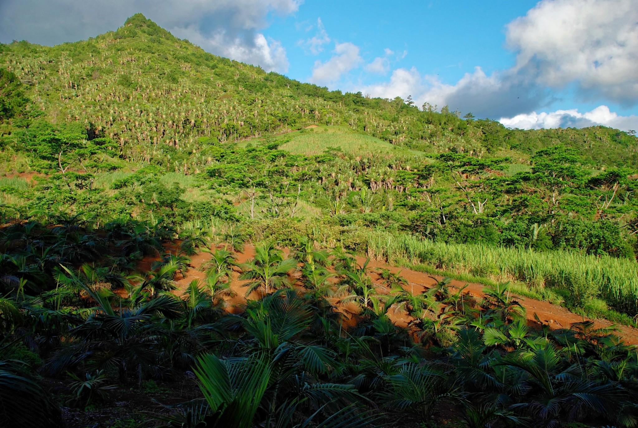 Landschaft - Mauritius