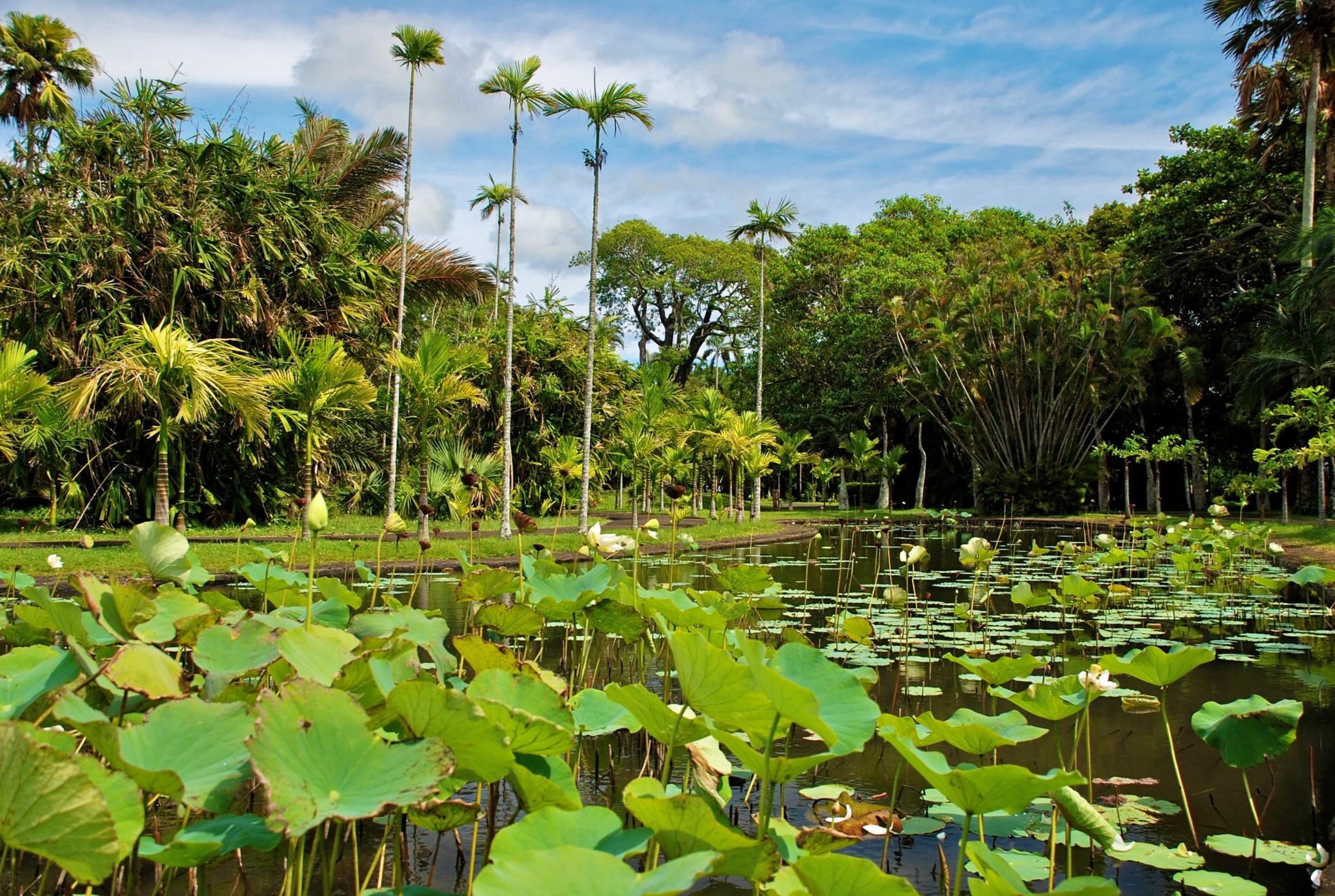 Pamplemousses (Botanischer Garten)