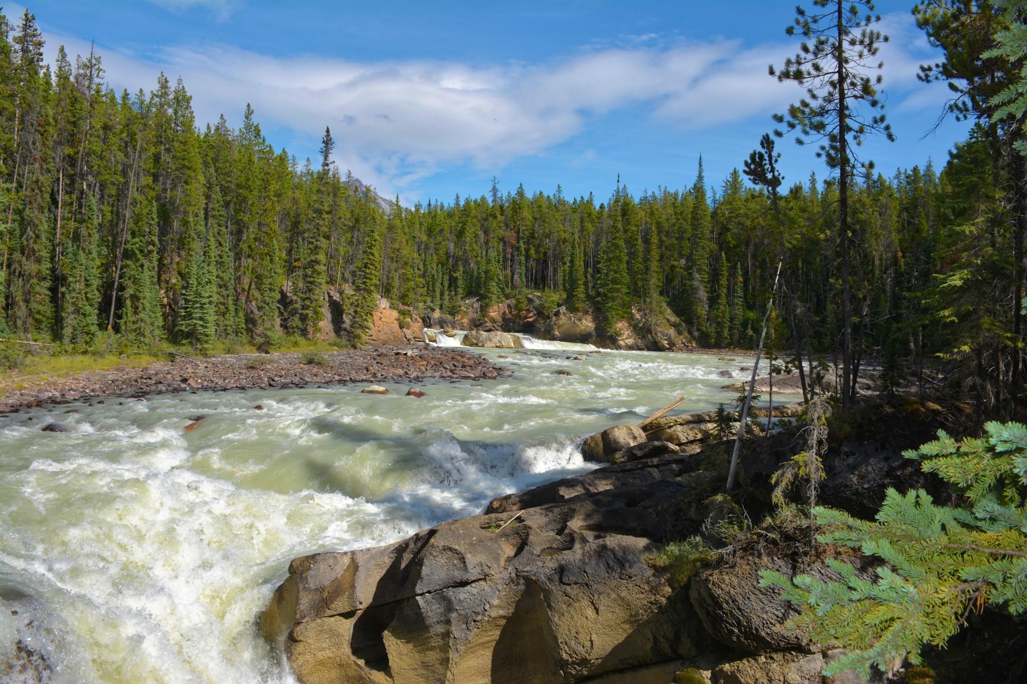 Sunwapta Falls - Jasper NP