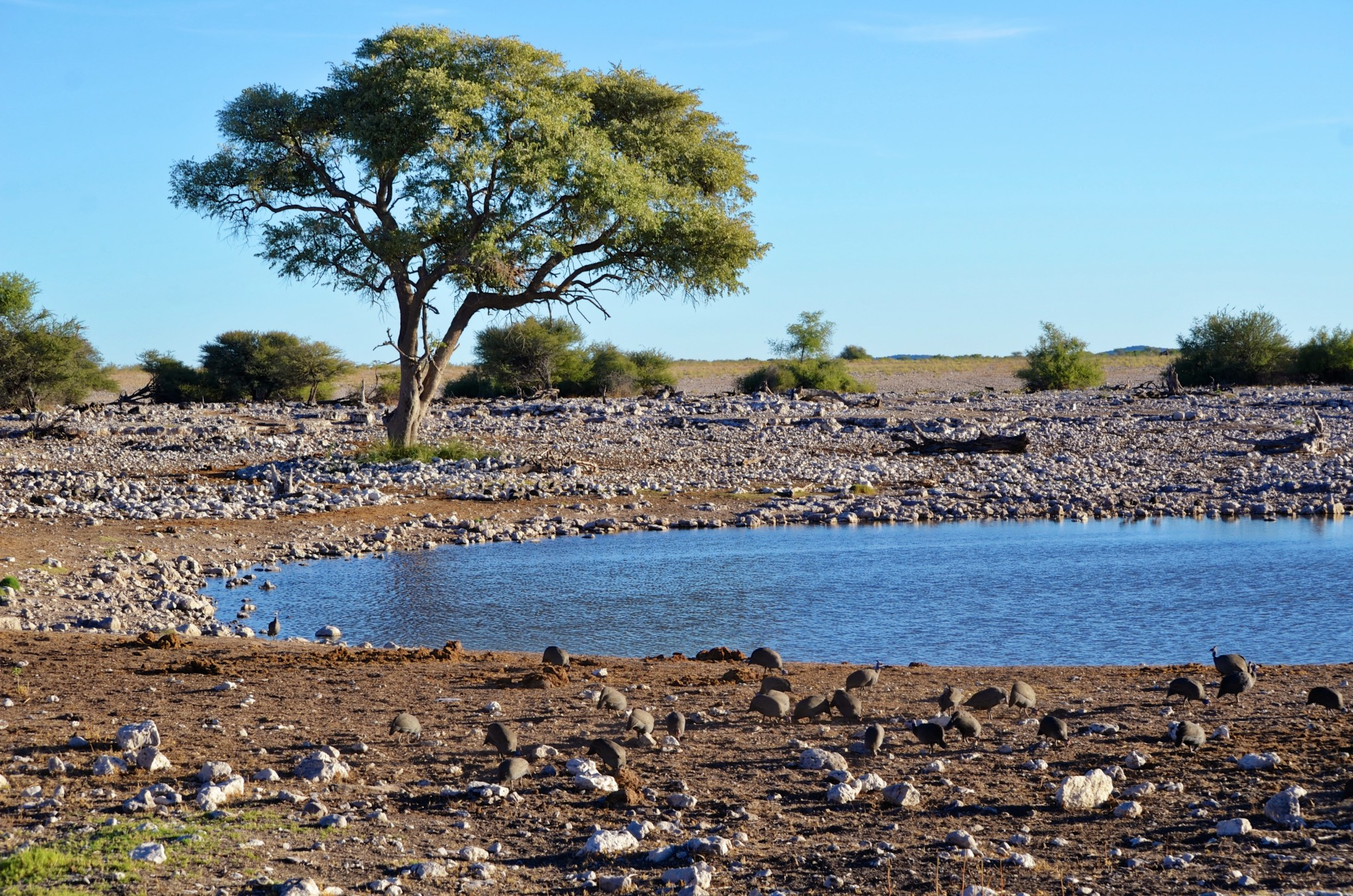 Wasserloch - Etosha Nat. Park