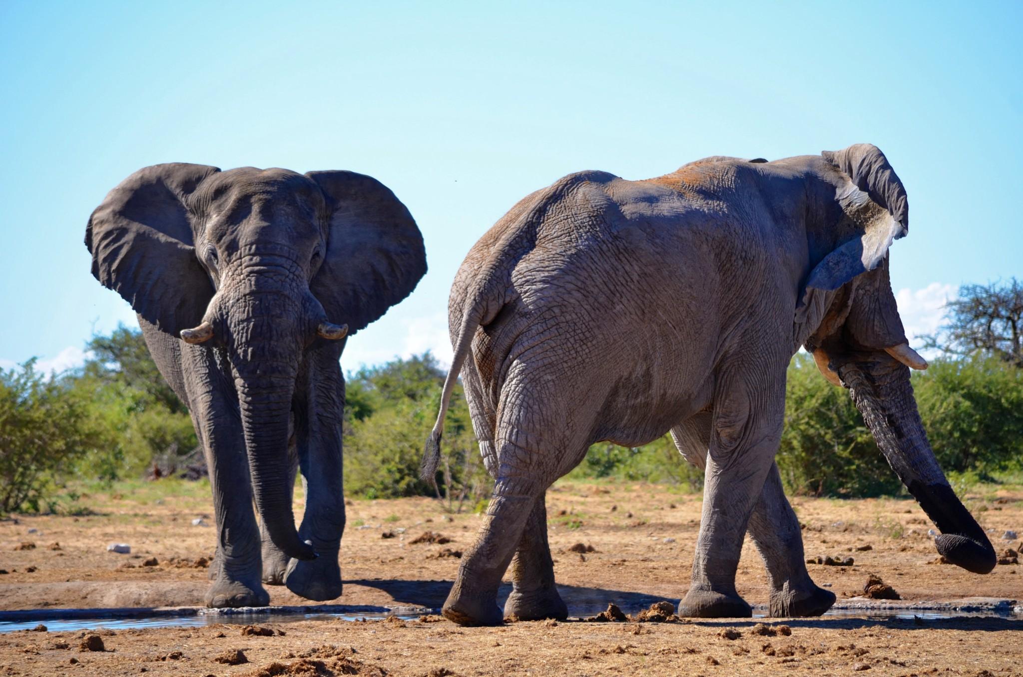 Elefanten - Etosha Nationalpark