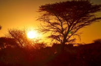 Sonnenuntergang - Kambaku Safari Lodge