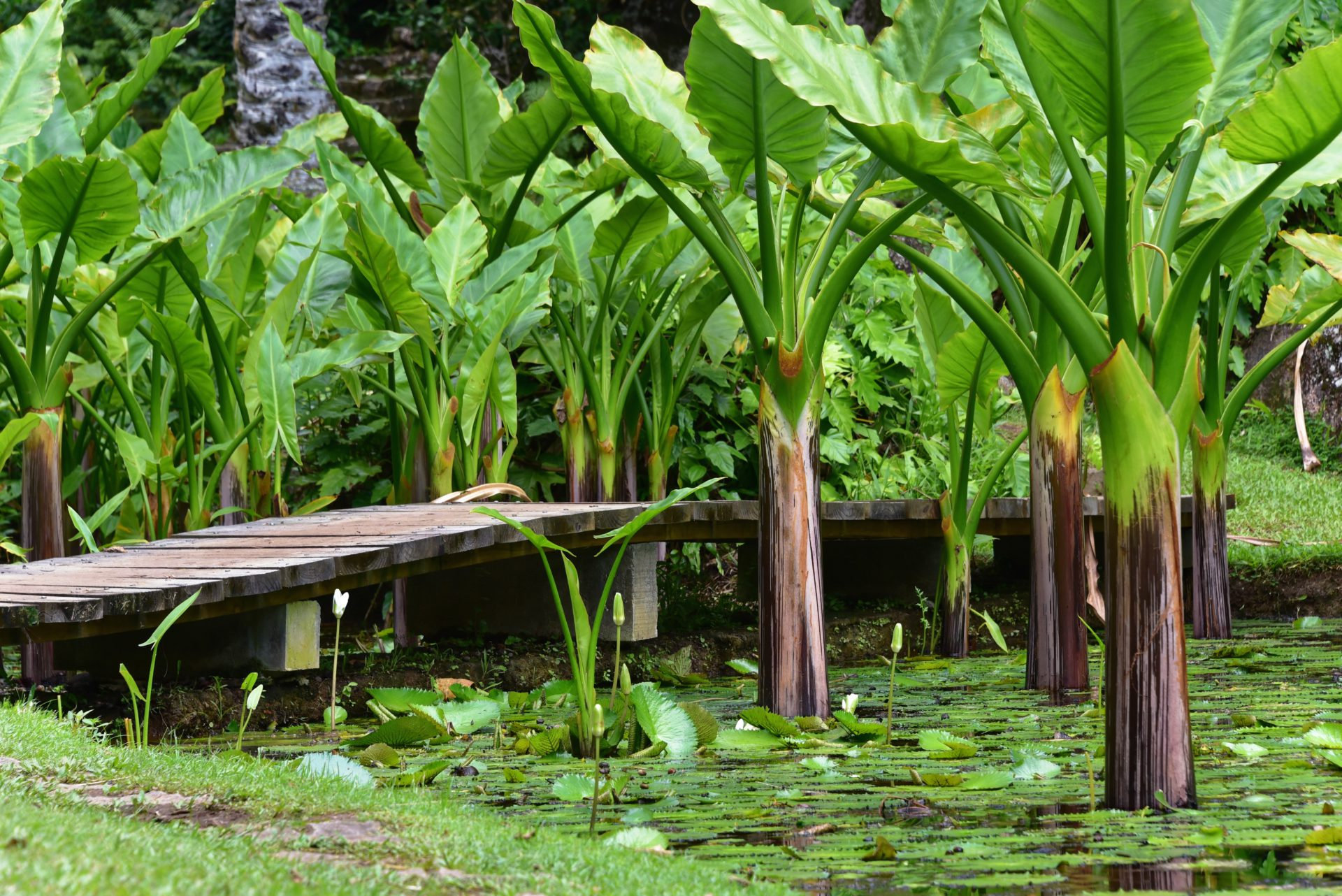 Botanical Gardens - Mahe
