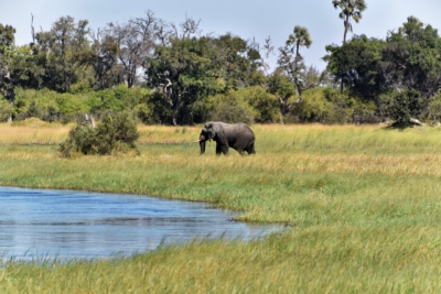 Elefant im Okavango Delta