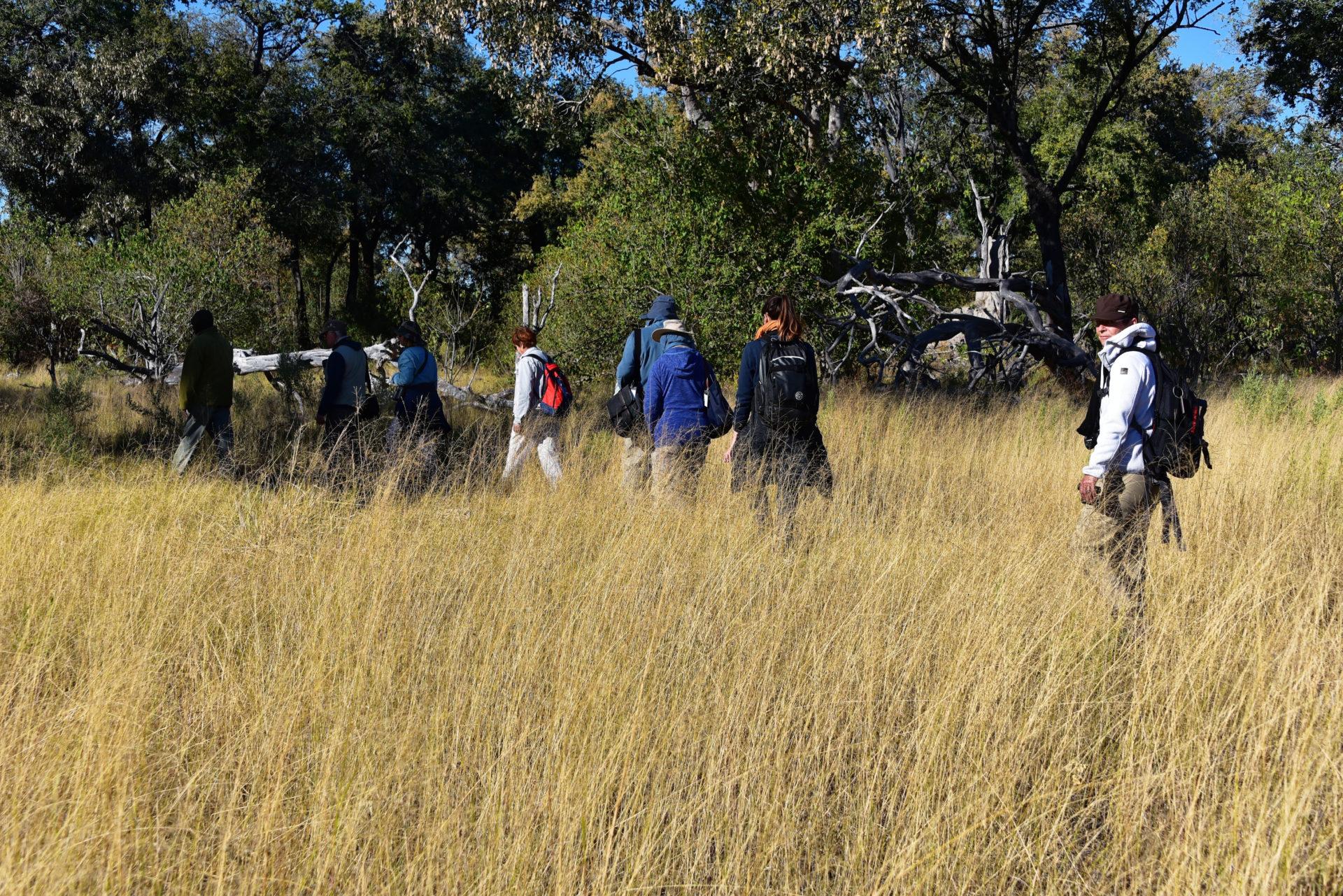 Bushwalk im Moremi Crossing - Okavango Delta - Botswana