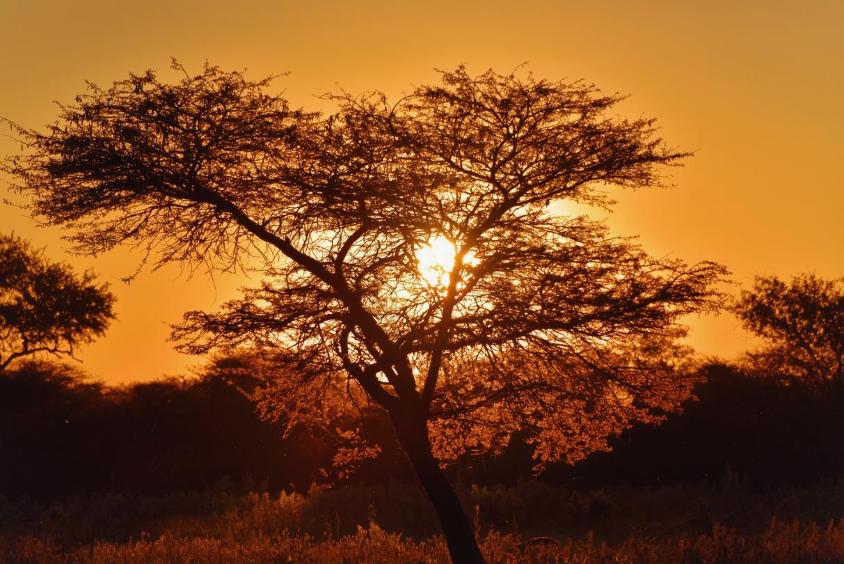 Sonnenuntergang im ONGUMA BUSH CAMP
