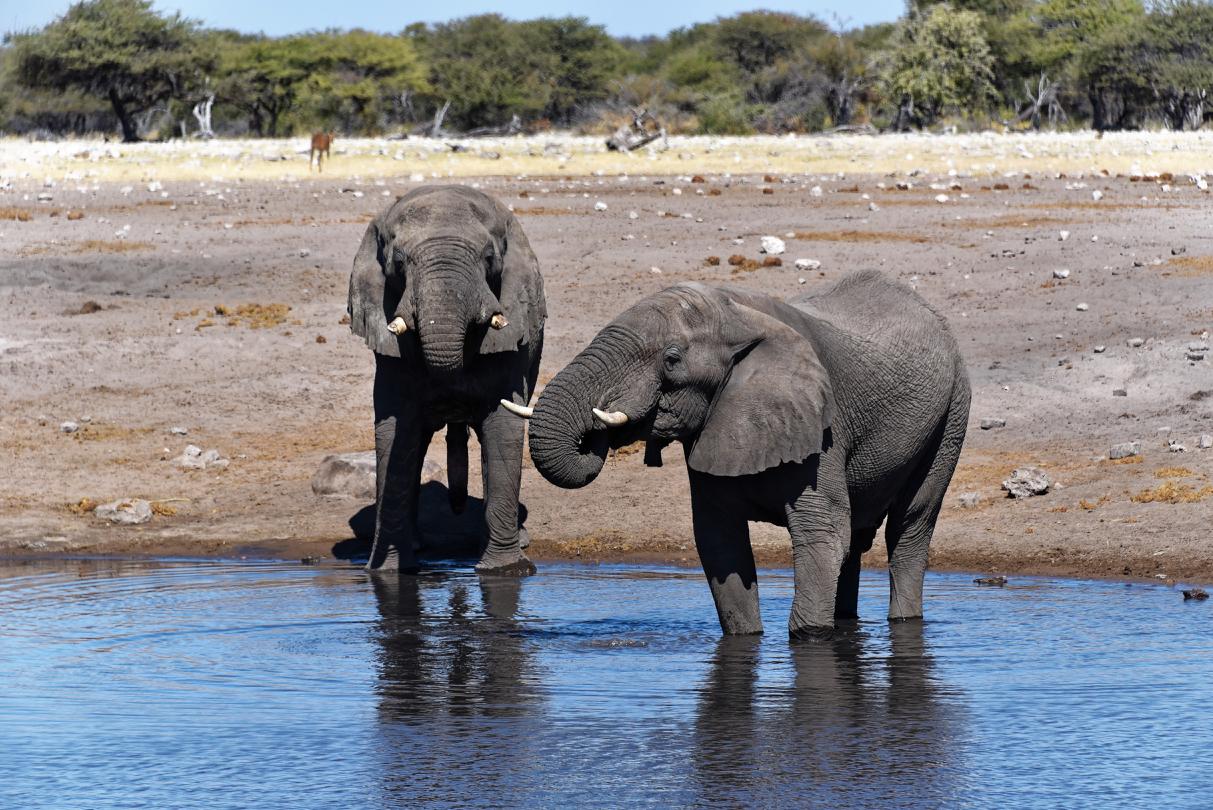 Elefanten im Etosha National Park