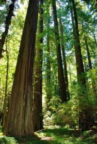 Humboldt State Park - Kalifornien